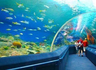 Du lịch Nha Trang - Thủy cung thu nhỏ tại Viện Hải Dương học