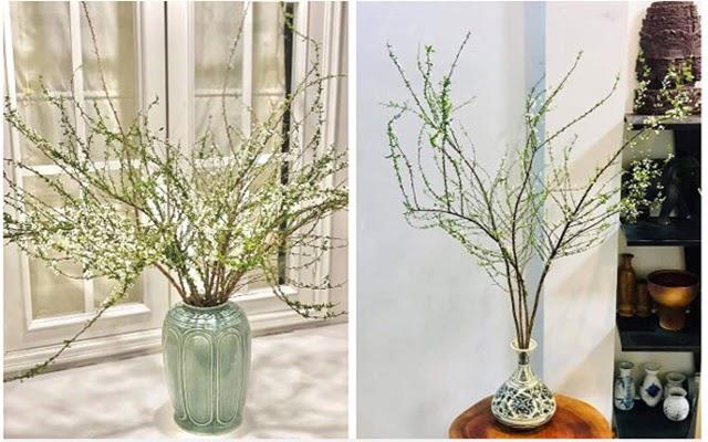Những bình hoa tuyết mai giúp cho không gian thêm phần sang trọng